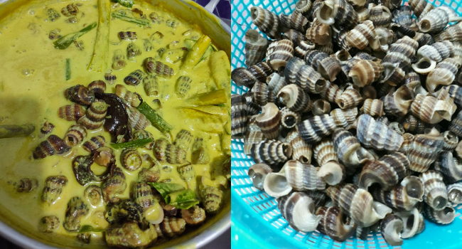 Tips Cuci Siput Sedut Sehingga Hilang Lumpur & Segala Lendir, Memang Berhasil Lah!