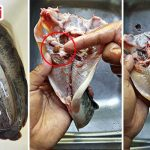 Wajib Buang 'Benda' Ini Untuk Elak Ikan Keli Hanyir & Berbau