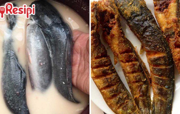 tips goreng ikan keli